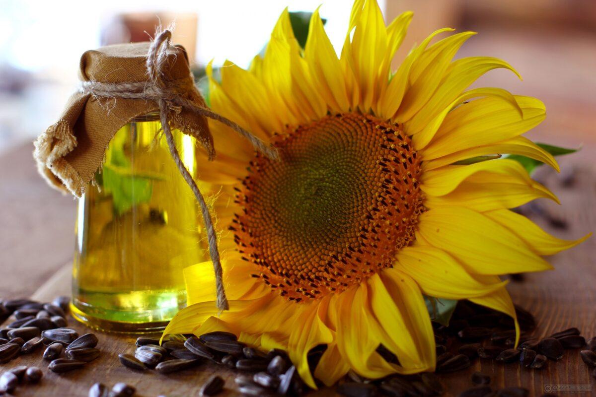 Manfaat Minyak Bunga Matahari Bagi Tubuh Yang Tidak Banyak Diketahui