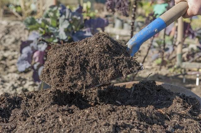 pupuk kompos nutrisi